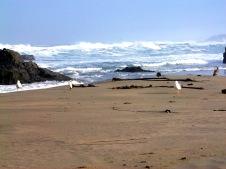 waves n birds-01 BY CHARLEBOIS