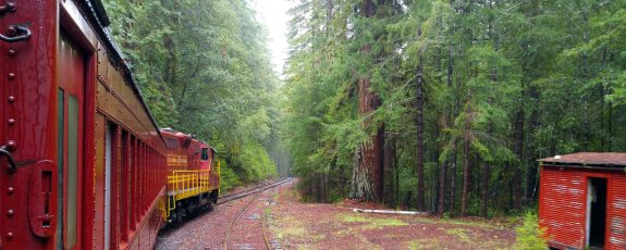 cropped-redwood-route-01-med-by-charlebois.jpg