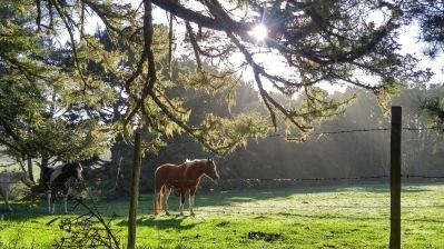 cr horse-02 med BY CHARLEBOIS