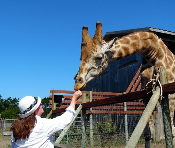 feeding giraffe-01-med