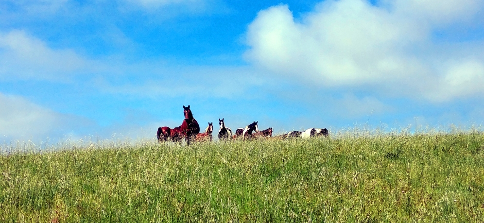 deer haven ranch horses-14 BY CHARLEBOIS