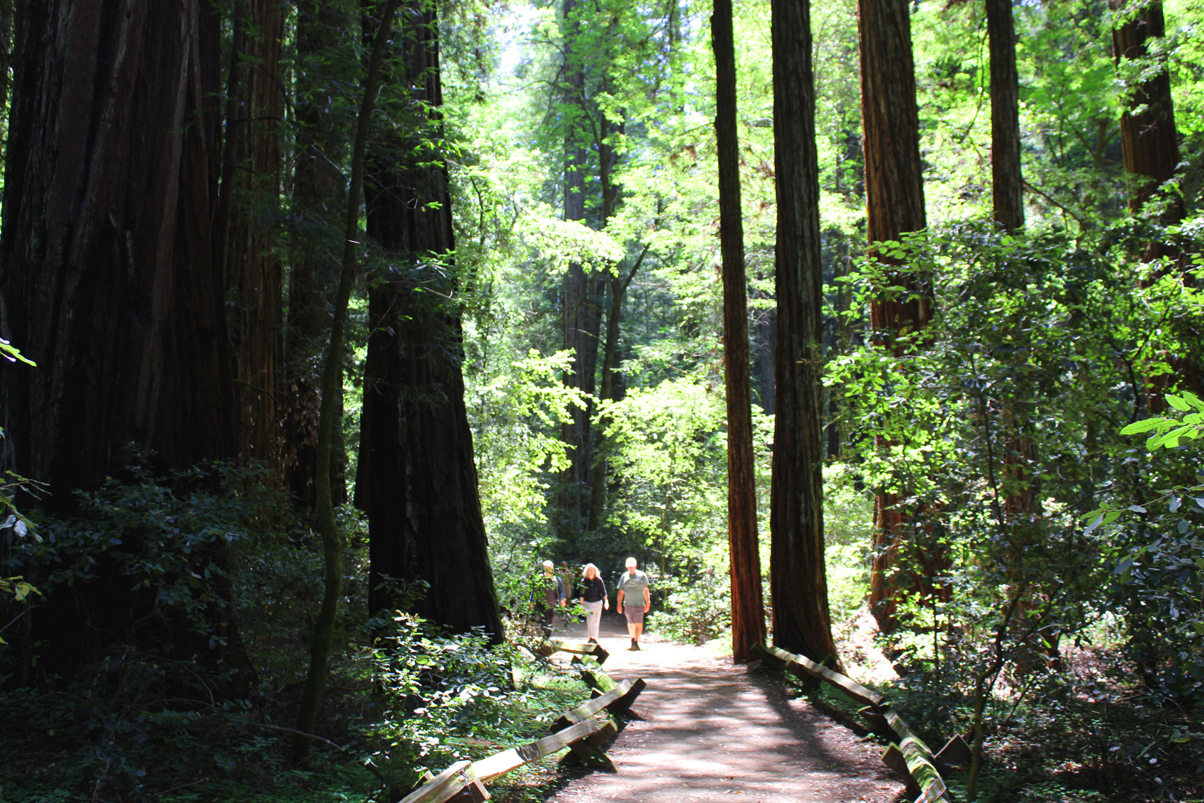 Armstrong Redwoods, Santa Rosa California. Photo: Mary Charlebois